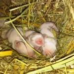 kleine Zwerge drei Tage